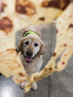 13/02/2018   Repro Free:   Gallagher from the Irish Guide Dogs at the Portershed who hosted a Pancake Tuesday Morning in aid of the Irish Guide Dogs . Photo: Andrew Downes