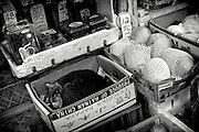 Hong Kong | HongKong | 02.12.2012 :  <br /> <br /> hier: Eine Katze schl&auml;ft in der Auslage eines Obsth&auml;ndlers<br />   <br /> Sascha Rheker<br /> 20121202<br /> <br /> <br /> <br /> [Inhaltsveraendernde Manipulation des Fotos nur nach ausdruecklicher Genehmigung des Fotografen. Vereinbarungen ueber Abtretung von Persoenlichkeitsrechten/Model Release der abgebildeten Person/Personen liegt/liegen nicht vor.] [No Model Release | No Property Release]