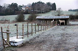 © Licensed to London News Pictures. 19/01/2015<br /> Horses stay close to their stables.<br /> A very cold morning St Pauls Cray,Orpington,Kent. today (19.01.2015)<br /> Weather warning has been issued across most of the uk as temperatures dropped overnight to -11c in parts.<br /> <br /> (Byline:Grant Falvey/LNP)