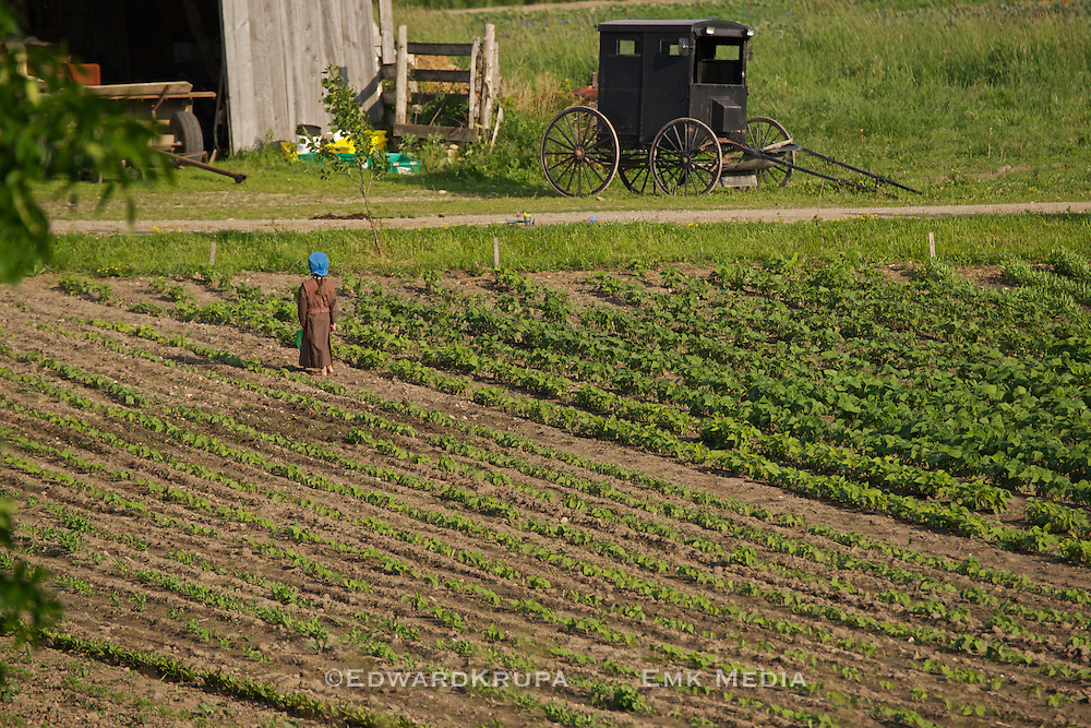 Child playing at working the fields on a Amish farm near Lucknow, Ontario.
