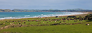 12x33-inch Panoramic of Colac Bay, Southland, New Zealand