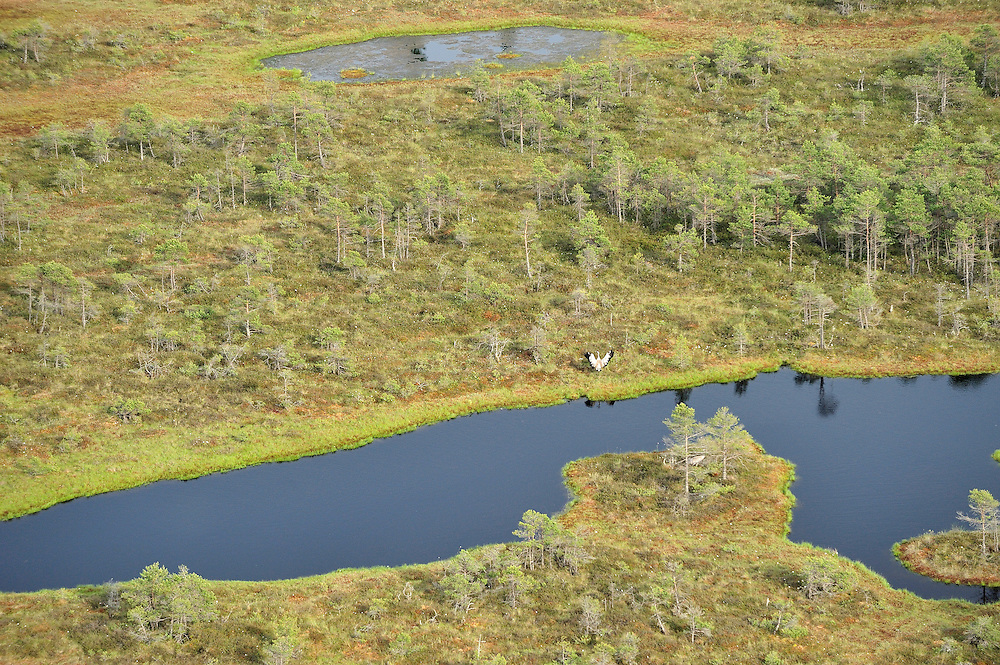 Kemeri National Park, Bog forest, Latvia