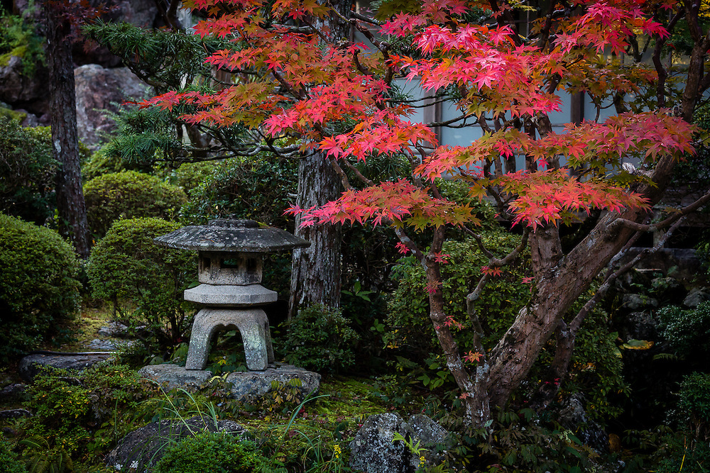 A small stone lantern and maple tree at the entrance of Ekoin Temple in Koyasan.