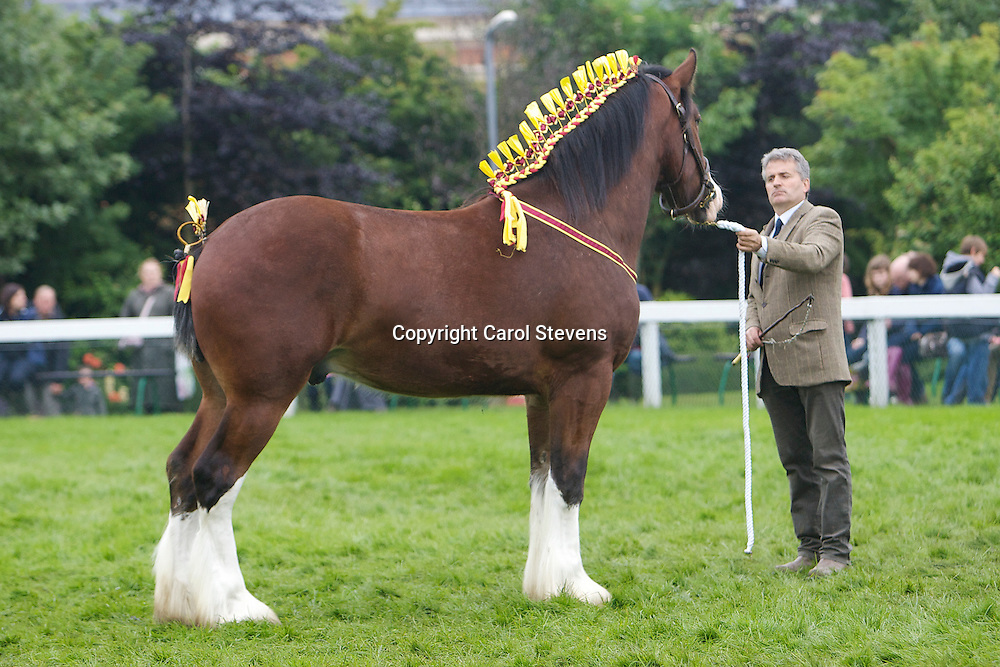 M R J Bloom  Bay Gelding  f  2010<br />