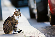 Tabby cat sits on the pavement, Oxfordshire, United Kingdom