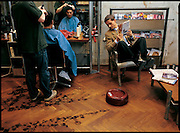 In a photo-illustration depicting one way that roboticists are developing robots to take over routine tasks, the Electrolux Robotic Vacuum Cleaner sucks up hair at a Hamburg, Germany,  barbershop. Soon to be available from Electrolux, a Swedish appliance company, the machine will vacuum floors constantly with its small, quiet, battery-powered motor. From the book Robo sapiens: Evolution of a New Species, page 162-163.