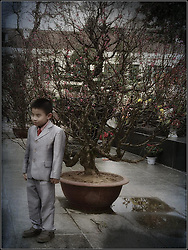 Boy dressed in a suit poses for photographs in a garden filled with potted peach blossom trees, Hanoi, Vietnam, Southeast Asia