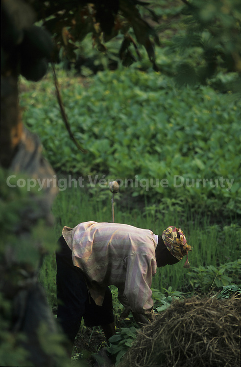 PEASANT WORKING IN A FIELD NEAR BRAZZAVILLE, CONGO