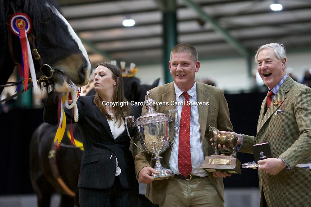 Alistair &amp; Matthew King's SNELSON GATSBY f 2014<br /> Sire  Warley Charlie<br /> Dam  Hainton Quest<br /> Breeder  Mr J Williamson<br /> Winner  Class 17  Stallions, 3 years old<br /> Champion Stallion