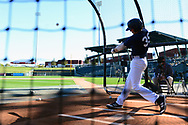 MESA, AZ - FEBRUARY 5:  Austin<br /> Wells takes batting practice during the 2017 Prospect Development Pipeline Premier at Sloan Park on Sunday, February 5,  2017 in Tempe, Arizona. (Photo by Jennifer Stewart/MLB Photos)