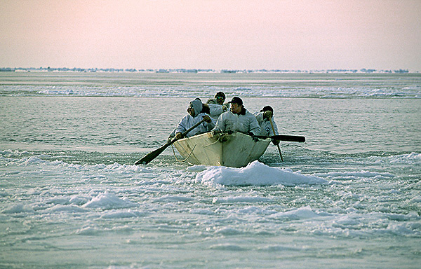 Barrow, Alaska, Native whaling crew searching for bowhead whales from their traditional umiak boat.