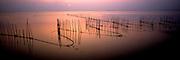 SPAIN, COSTA DEL AZAHAR La Albufera lagoon, nets, wetlands
