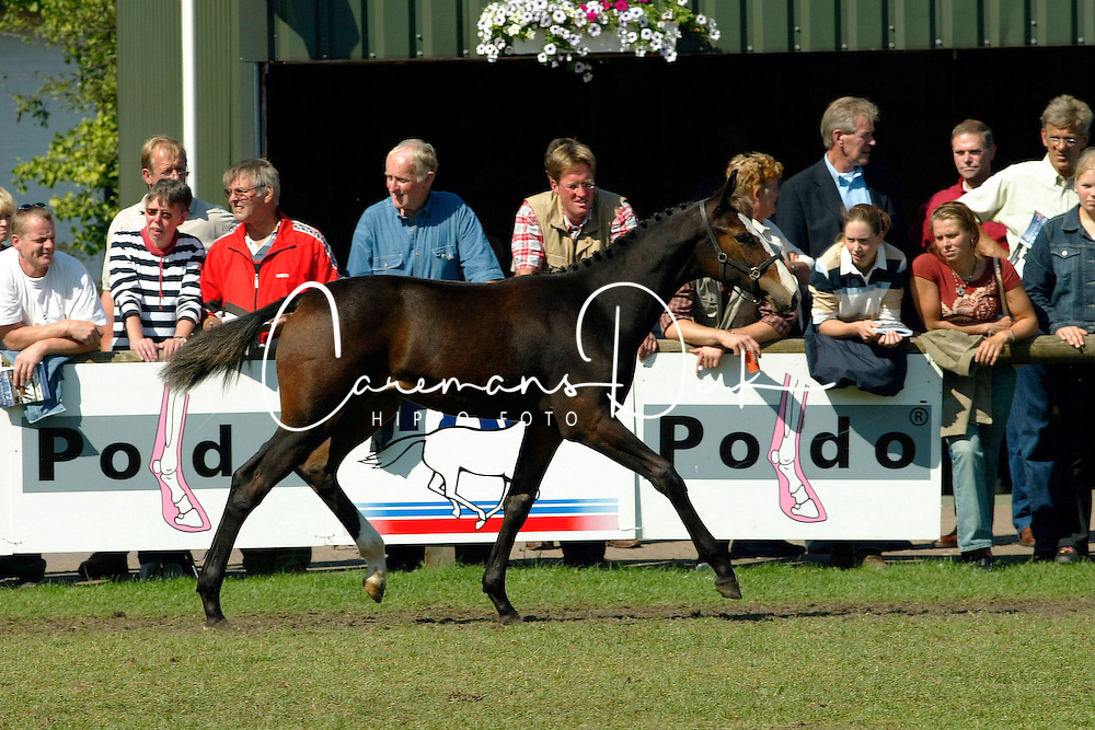 082-Wodelia<br />