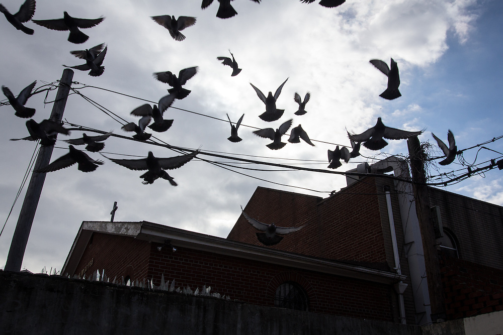 Pigeons fly over the Greek Church of St. Constantine and into the parking lot of a Korean supermarket.