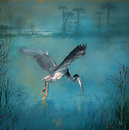Painterly rendition of a tri-colored heron with spread wings swooping down to fish in a blue wetland water landscape with faint vegetation