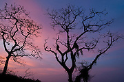Trees at dusk in Isla Pacheca shore. Las Perlas Archipelago, Panama Province, Panama, Central America.