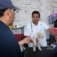 Toluca, Mex.- La compra venta de cachorros caninos que ya era tradicional los domingos en la alameda central de esta ciudad, y en la cual no existia nunguna reglamentación, ahora se encuentra organizada por la Asociación Civil Mundo Perrón y Algo Más, ofreciendo de esta manera dentro del terreno que se encuentra en las esquinas de Quintana Roo y Plutarco González, todas las garantias tanto a los compradores como a los vendedores de estos animales. Agencia MVT / Arturo Rosales Chávez. (DIGITAL)<br /> <br /> NO ARCHIVAR - NO ARCHIVE