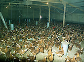 1987 - Poultry House At Warrenstown             (R54).