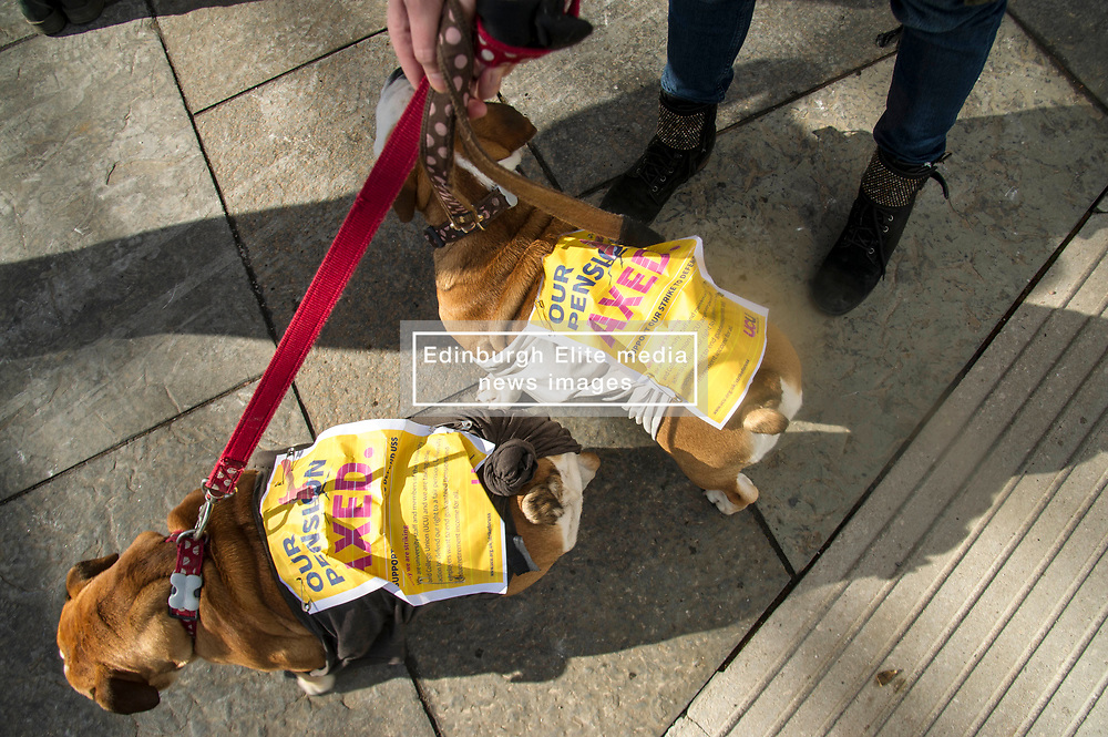 Pictured: Bulldogs Frankie and Daisy were supporting their owner Sue Cowan, lecturer at Heriot Watt University<br /> University pensions row rally was held outside the Scottish Parliament in Edinburgh today. University staff were joined by politicians and students as part of the strike action event. <br /> <br /> Ger Harley | EEm 8 March 2018