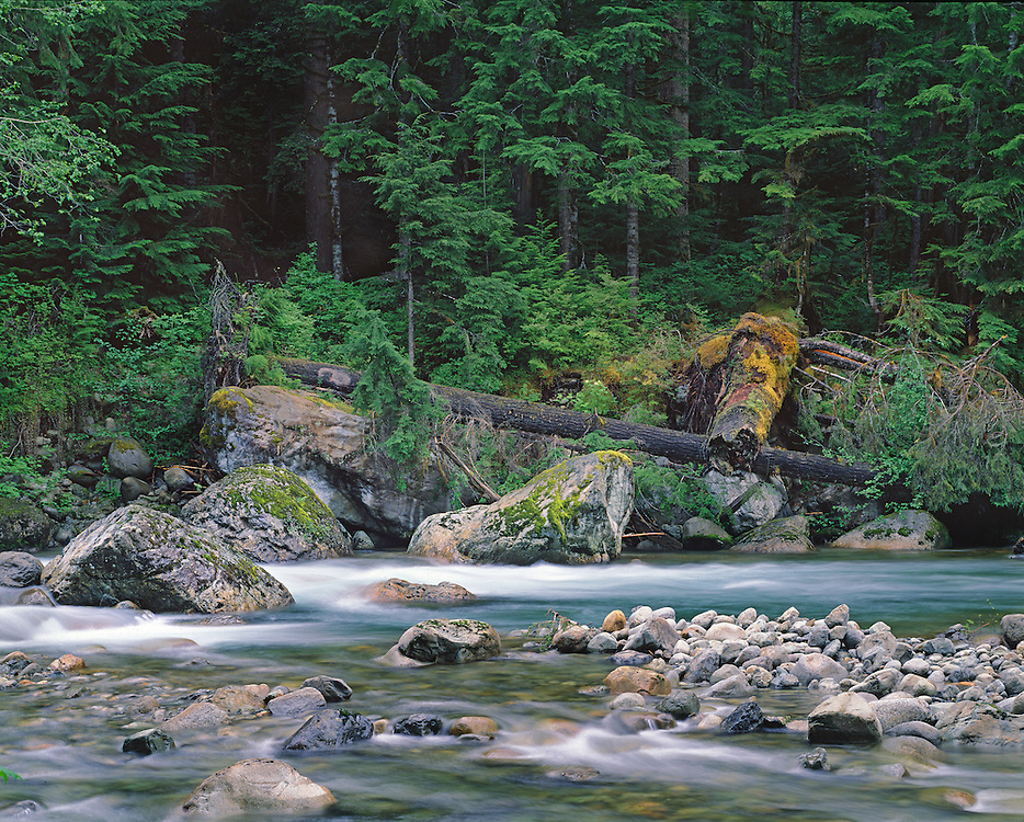 Spring Morning on the Sauk River, North Cascades WA