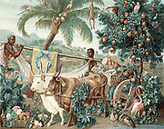 Wealth of the Indies. 17th century design for Gobelin tapestry showing rich flora and fauna and products of West Indies and Central and South America. Chromolithograph