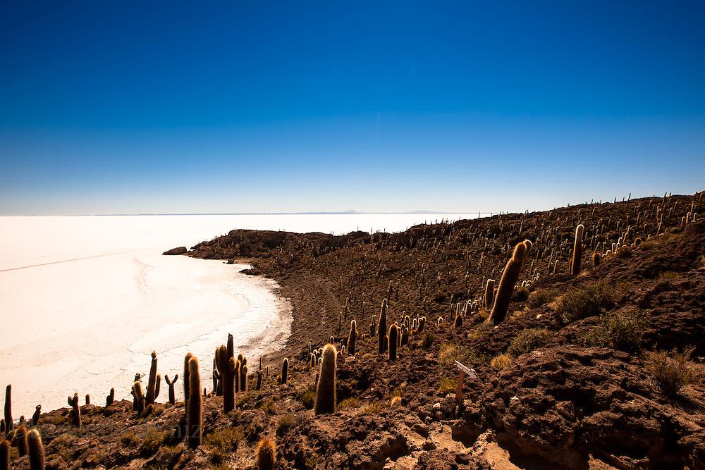 "Cactus stand in the ""Isla del pescador"" (fisherman´s island)  in the middle of world´s largest salt flat, Uyuni, Bolivia: Bernardo De Niz"