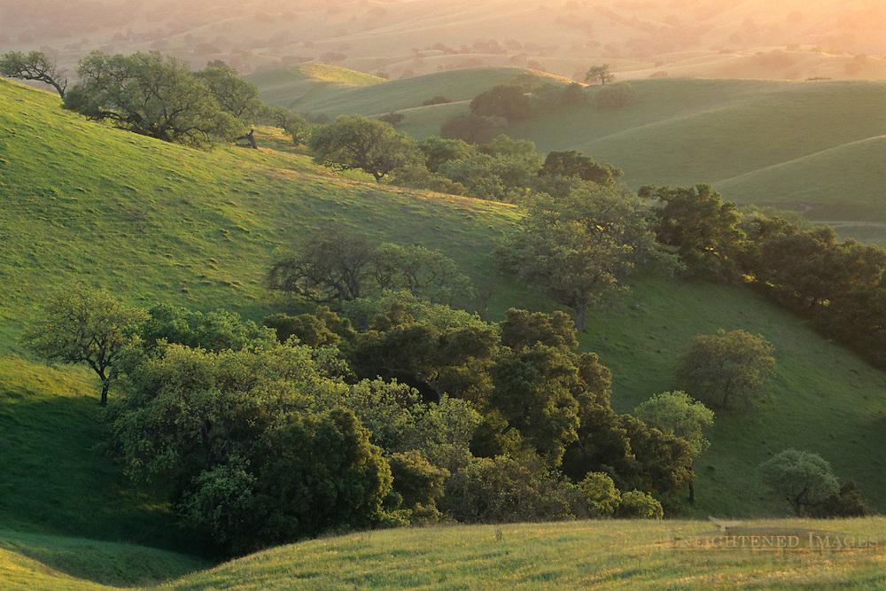 Green hills in spring at sunset Foxen Canyon Road, near Los Olivos, Santa Barbara County, California