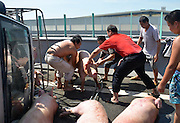 FUZHOU, CHINA - AUGUST 05: (CHINA OUT) <br /> <br /> A van carrying 12 pigs turns over on major Road<br /> <br /> People try to catch pigs on the third ring road on August 5, 2013 on Fuzhou, Fujian Province of China. A van carrying 12 pigs turned over on the third ring road on Monday. A pig died of heatstroke as the temperature reached 40 degrees Celsius. <br /> ©Exclusivepix
