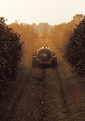 Citrus Orchard Tractor Spraying Agriculture