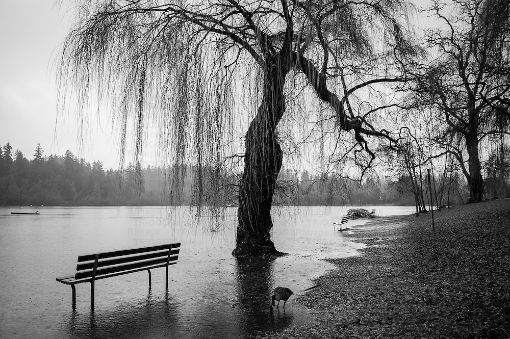 A flooded nature path, with park benches and trees in water on a rainy day.
