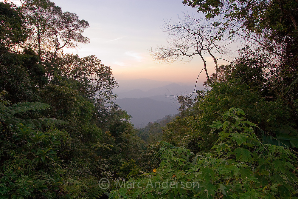 A view over tropical rainforest and mountains at dusk in Frasers Hill, Malaysia..