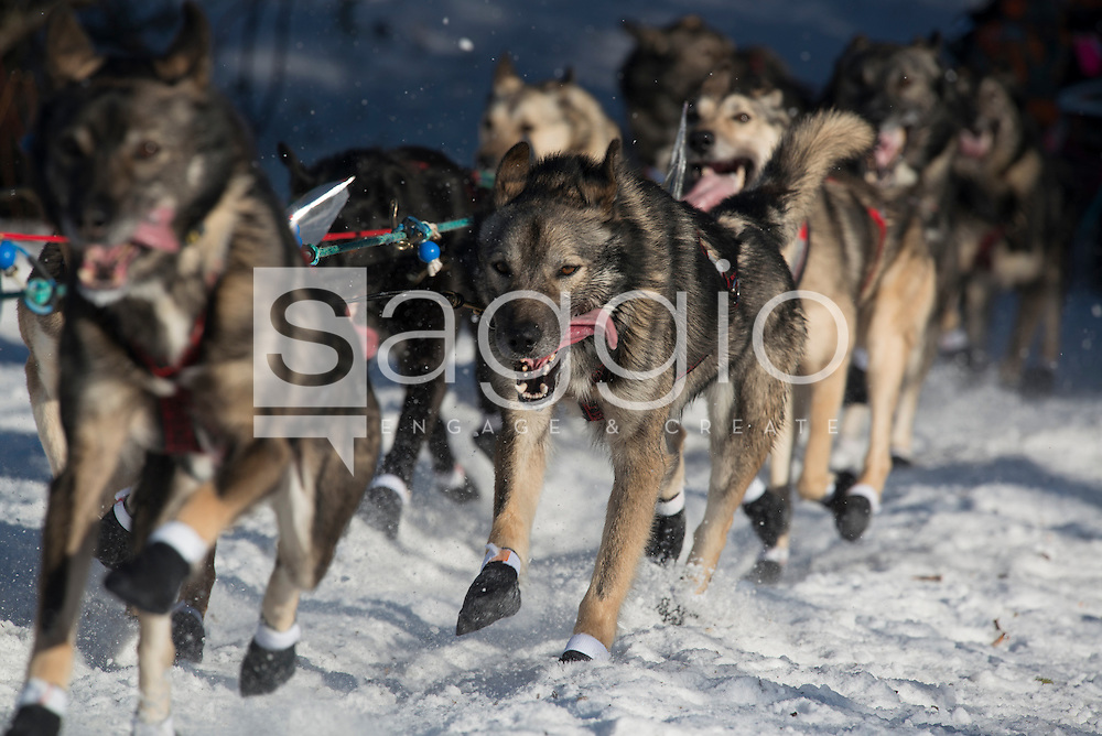 A dog team runs down the trail on Long Lake shortly after leaving the re-start in Willow, Alaska on Sunday, March 6th during the 2016 Iditarod race.