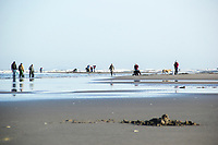 Digging razor clams in Seaside, Oregon.