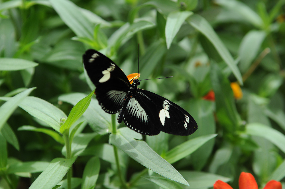 Brookside Gardens<br /> Wings of Fancy