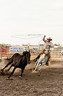 Will James Roundup, Ranch Rodeo, Wild Horse Roping, Hardin, Montana, Tom Curtin, Tina Curtin, MODEL RELEASED, PROPERTY RELEASED..