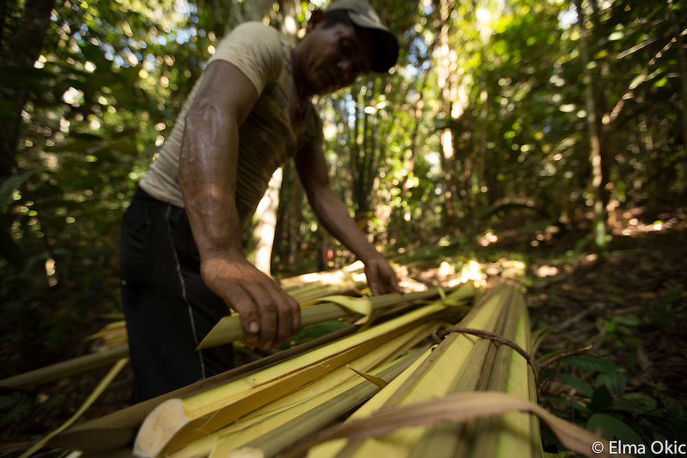 Palm leaves cutting expedition of the Sawre Muybu, a Munduruku indigenous community on the Tapajos River, Para, Brazil. The palm leaves are used as roof covering for people's houses and dwellings.