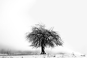 black and white stark tree in snow