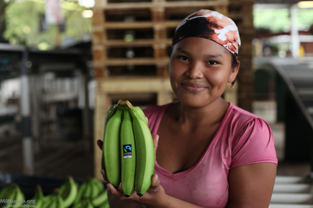 Feliciana Quintero, Ngäbe member of COOBANA, holds a fair-trade banana hand ready for export. COOBANA, Finca 51, Changuinola, Bocas del Toro, Panamá. September 3, 2012.