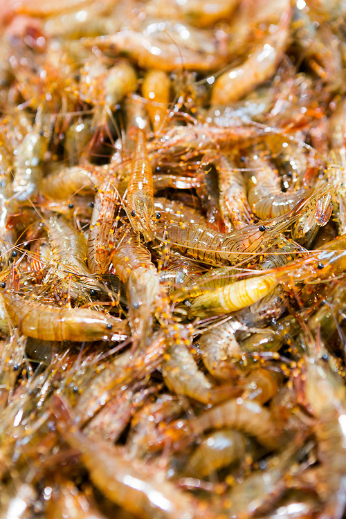 Close up of freshly caught prawns for sale at a fish market in Santiago de Compostela, Galicia, Spain.