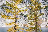 """Along The Lake"", Fine Art Limited Edition. 20 Prints. Larch trees changing colors near Inspiration Lake, Enchantment Lakes Wilderness Area, Washington Cascades, USA."