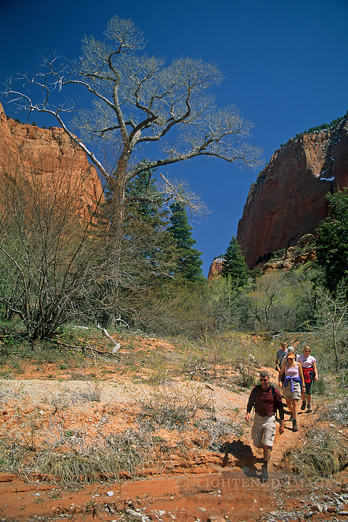 Hikers on the Taylor Creek Trail Kolob Canyons area, Zion National Park, UTAH