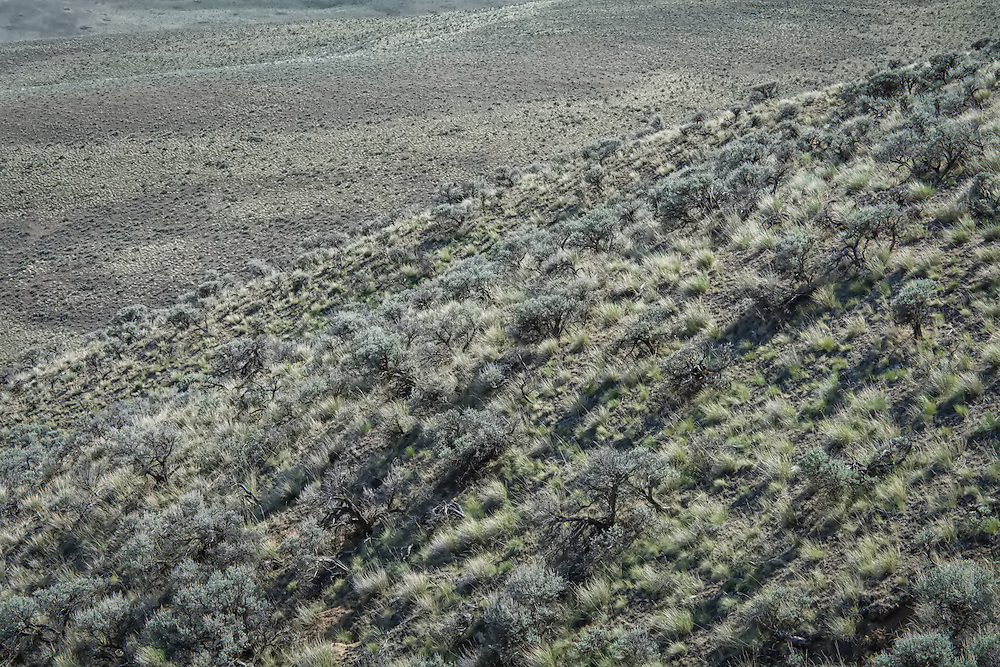 Rolling arid hills and miles upon miles of aromatic sagebrush, crumbled basalt rocks and heat in this desert-like landscape in Central Washington near Vantage, WA.