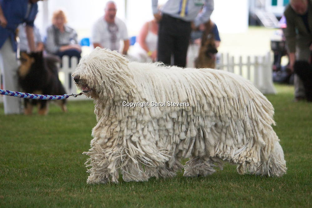 Hun Ch Piroska Von Thuringen At Whichendz<br />