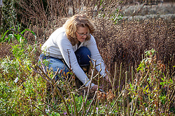 Cutting back and tidying a border in late winter or early spring