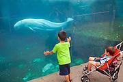 351021-1043G.Huey ~ Copyright: George H.H. Huey ~ Children watching the live Beluga whales at the Mystic Aquarium.  Mystic, Connecticut.