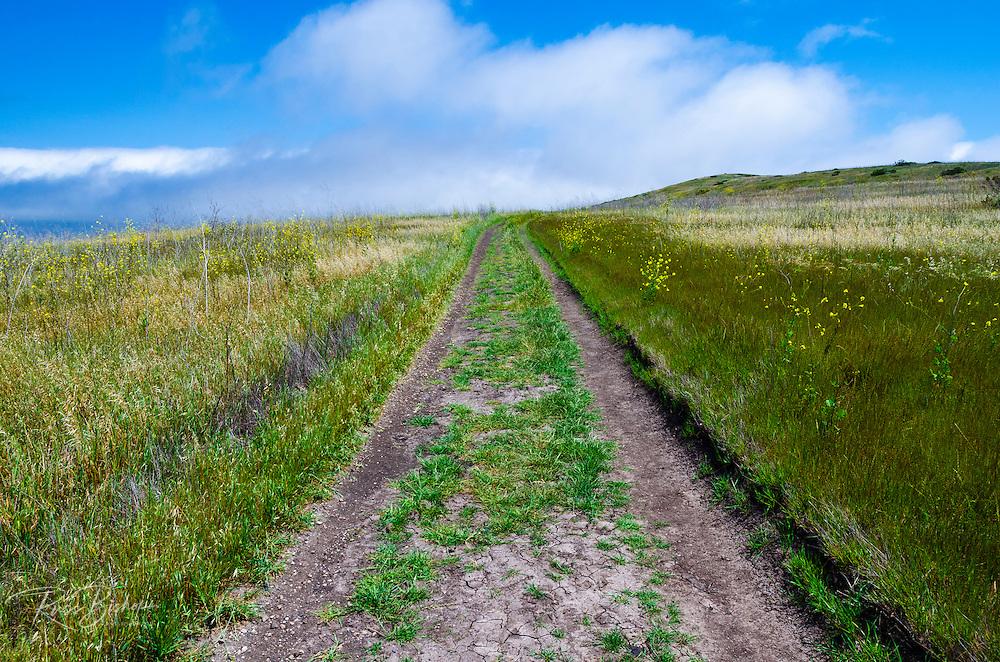 Dirt road at Scorpion Ranch, Santa Cruz Island, Channel Islands National Park, California USA