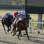 Lingfield 19th November