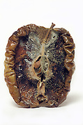 half apple in extreme rotten state