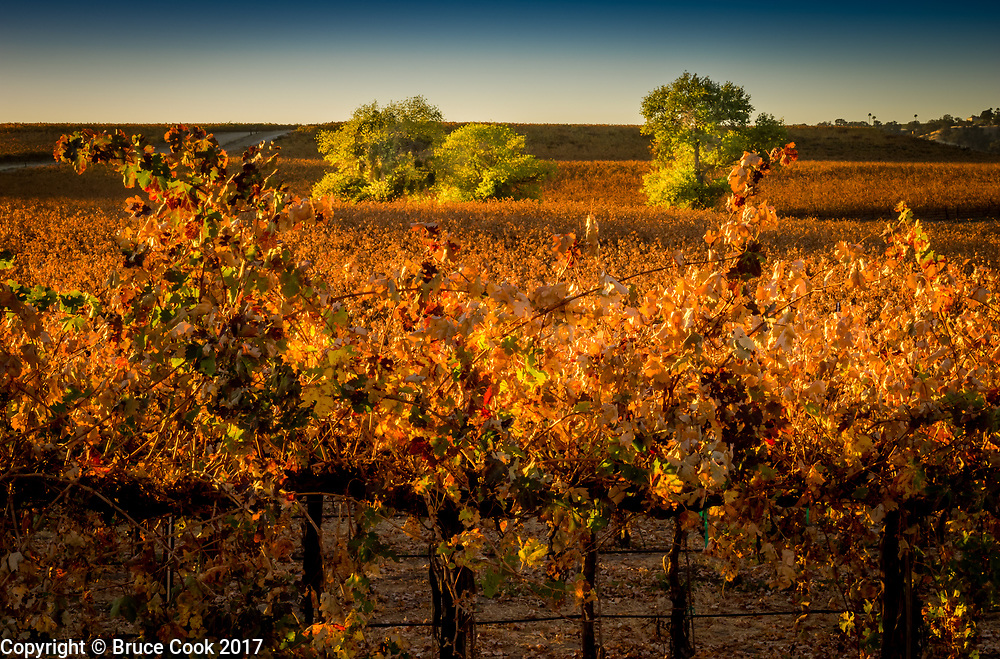Sunrise Vineyard 3