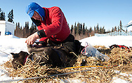 John Baker booties his dogs before leaving the Anvik checkpoint on Friday.